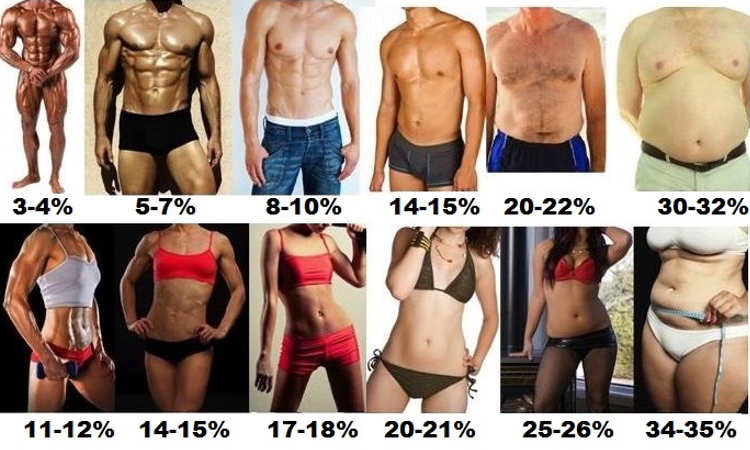 Fitness Update Body Fat Percentage Chart